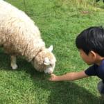 長門牧場 | 信州・白樺高原の無料で遊べる牧場を堪能! マルゲリータピッツア、牛、羊、アルパカを楽しめました