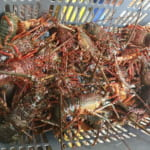 相浜漁協直売所 | 房州で一番安い店。伊勢海老三匹付の豪華すぎる海鮮炭火焼を海を見ながら堪能!