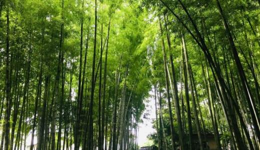竹林公園│東久留米の癒しの絶景スポットを訪問!アクセス、駐車場、飲食・売店・トイレ、おすすめ持ち物は?