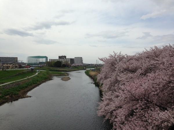 志木・いろは親水公園にて花見!新河岸川沿いの桜鑑賞は、全国2位のコロッケと地元のゆる~い雰囲気が良かった!