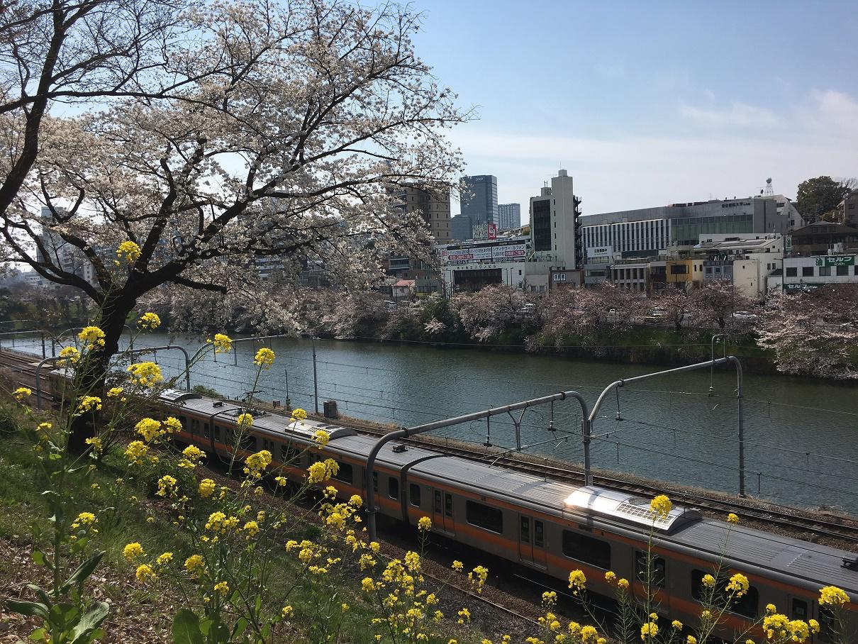 外濠公園は桜の満開直前!4月7~8日が満開の見ごろ、カナルカフェは2時間待ちで断念・・・