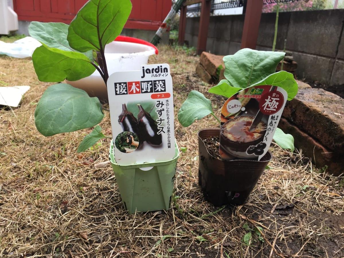自宅の庭で家庭菜園、3年ぶりに再開!目指せ、夏野菜のバーベキュー!【作りやすい野菜ランキング付】